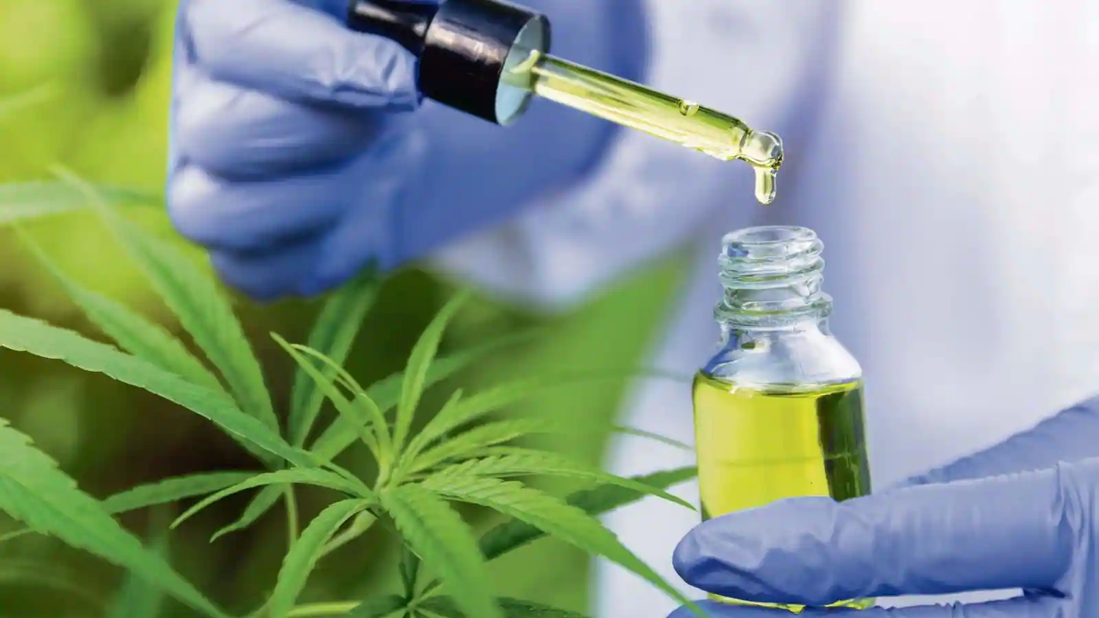 Thousands of people already buy CBD in France (CBD en France), only you are missing